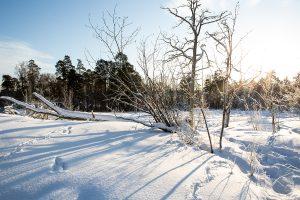 Talvinen kuva Karhusaaren keskiosasta
