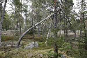 Karhusaaren puita